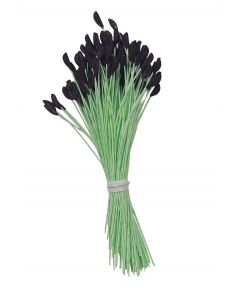 Black Tip Lily Stamen