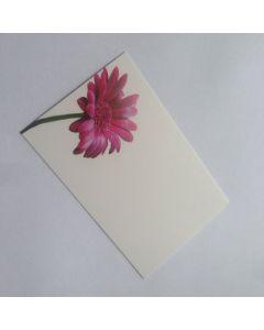 Gerbara Cardette Cards (Pack of 5)